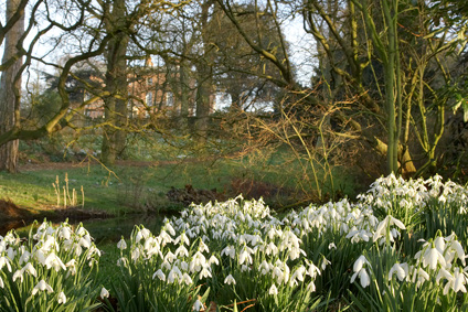 Snowdrops at Rode